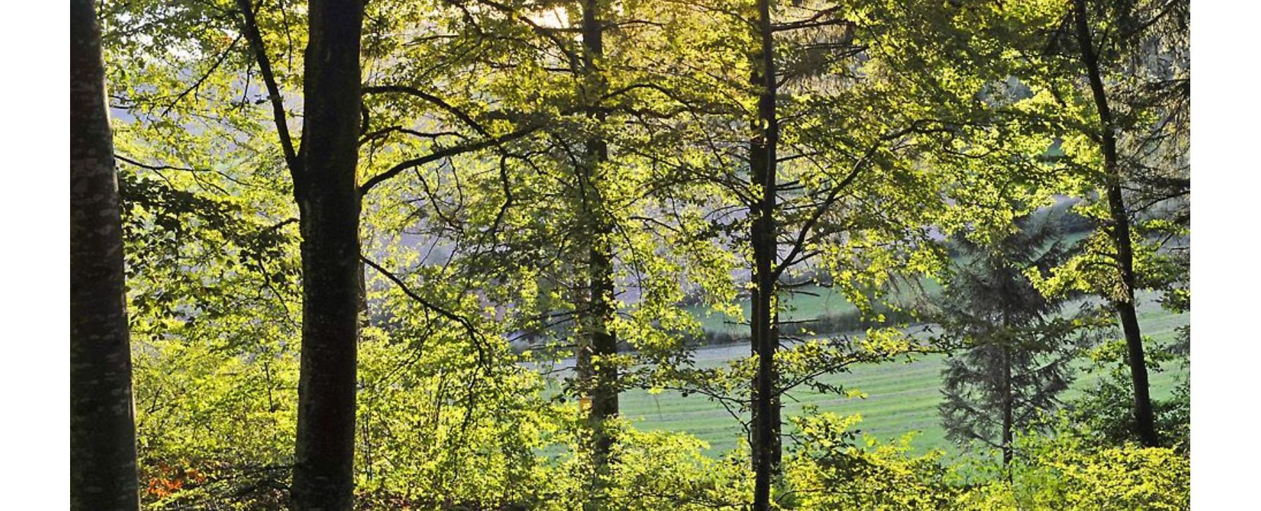 """Wald zur """"Länge"""""""