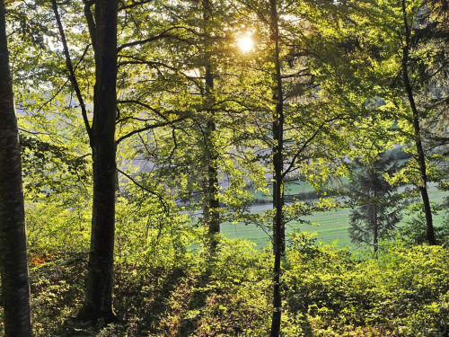 Bäume im Wald mit Sonnenstrahlen