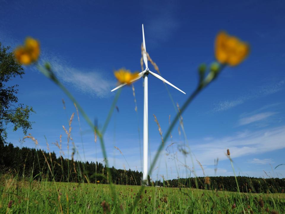 Ein Windrad steht auf dem Fürstenberg auf einer grünen Wiese, im Vordergrund ist eine gelbe Pflanze zu sehen