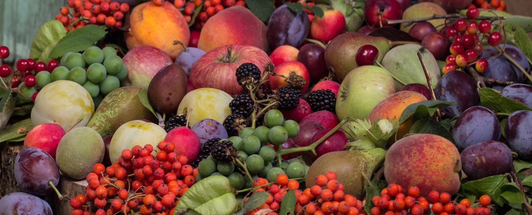 verschiedene Früchtevielfalt